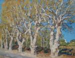 Sycamores, South of France