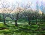Trees in the spring
