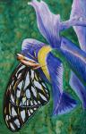 The Butterfly on Iris