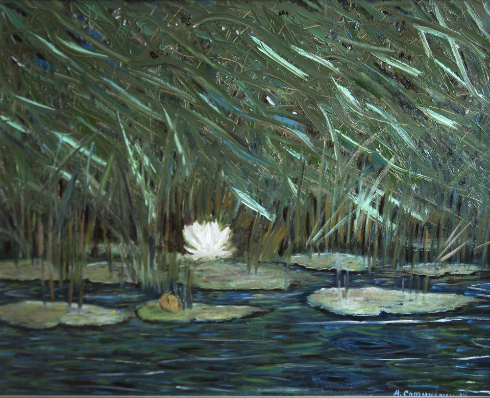 Safiullin Albert. The lonely Lily in the Reeds