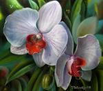 Favorite orchids.