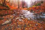 Stream in the forest. Velvet autumn